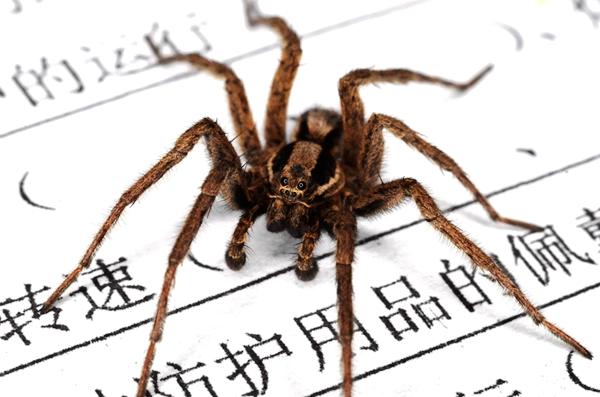蜘蛛有八条腿